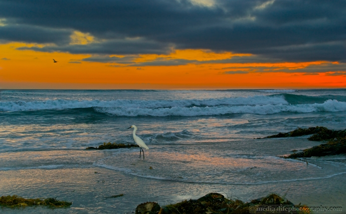 Egret at Sunset